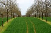 PIANTAGIONI DA LEGNO, A ROMA C'E' ANCHE VENETO AGRICOLTURA