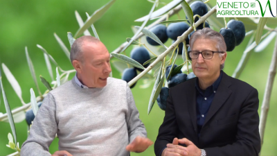 37 Radio Veneto Agricoltura – Il piccolo grande oliveto veneto
