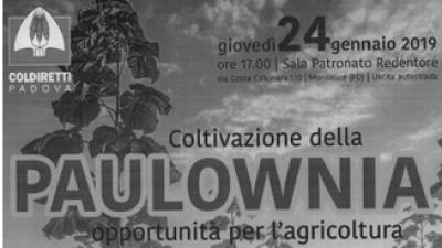"""Filiera legno-energia veneta OPPORTUNITÀ PER L'AGRICOLTURA,  LA COLTIVAZIONE DELLA """"PAULOWNIA"""""""