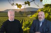 49 Radio Veneto Agricoltura – La ricerca in Vitivinicoltura