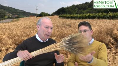 54 Radio Veneto Agricoltura – La storia del Grano Marzuolo