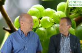 57 Radio Veneto Agricoltura – Lo Stato del Vigneto Veneto alla vigilia dell'Estate