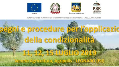 Impegni e procedure per l'applicazione della condizionalità (cod.P4-03-19)