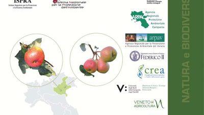 Frutti dimenticati e biodiversità recuperata. Il germoplasma frutticolo e viticolo delle agricolture tradizionali italiane. Casi studio: Campania e Veneto