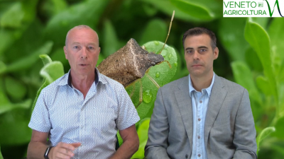 64 Radio Veneto Agricoltura – Il flagello cimice asiatica