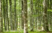 """VENETO AGRICOLTURA ALLA """"FIERA & FESTIVAL DELLE FORESTE"""" DI LONGARONE (BL)"""