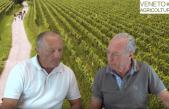 66 Radio Veneto Agricoltura – Le Strade del Vino e dei Prodotti Tipici