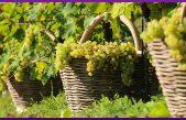 I numeri del comparto vitivinicolo veneto – 2019