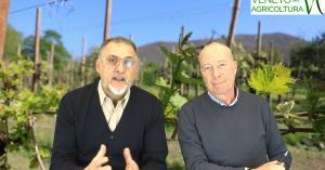79 Radio Veneto Agricoltura – Vitivinicolo: successi e preoccupazioni