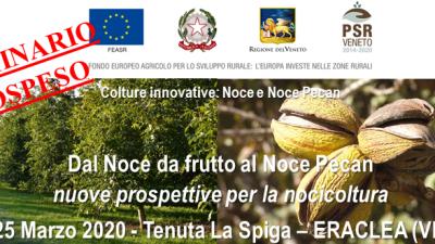 Colture innovative: Noce e Noce Pecan (cod.2A-10-20)