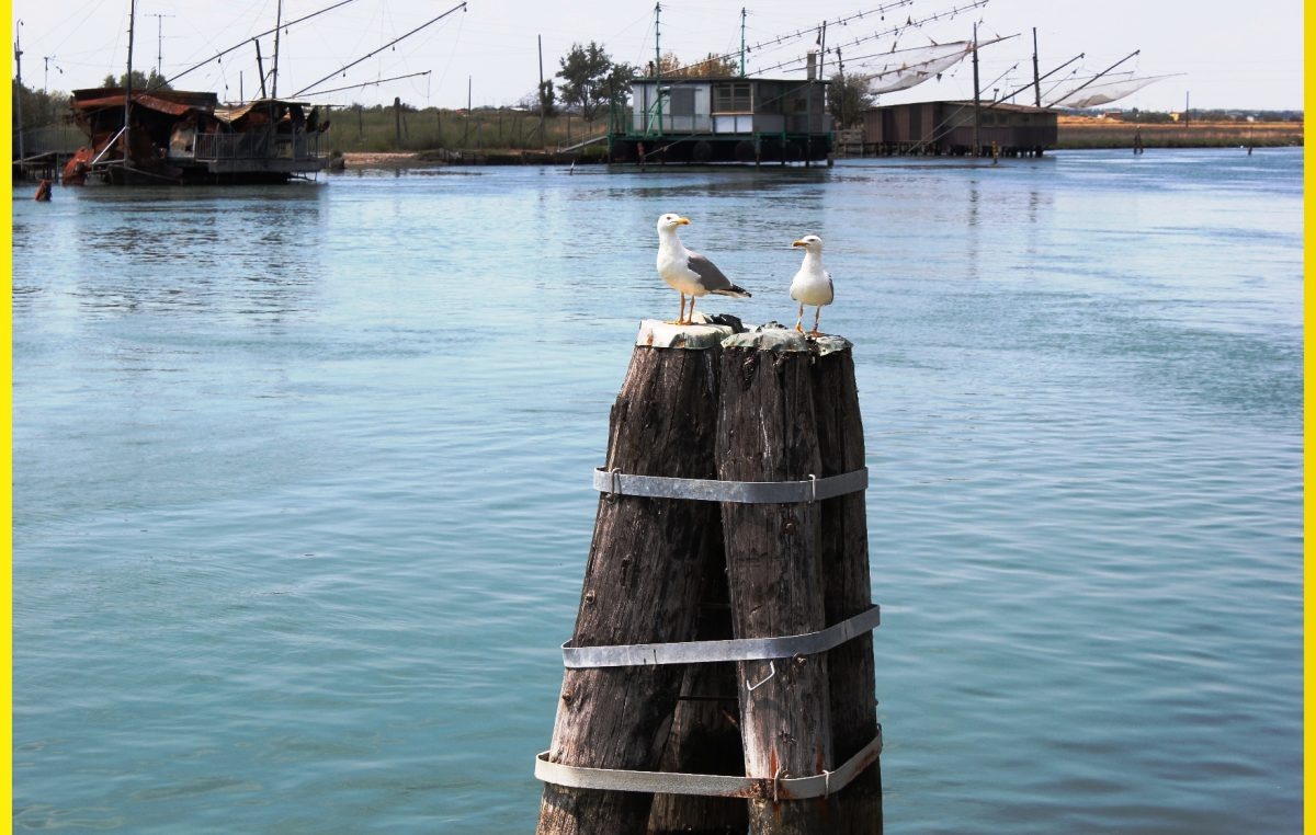 Le Marinerie di Goro e Porto Garibaldi 2015