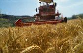 Cereali in Veneto: meno frumento e mais, più soia. News dai mercati