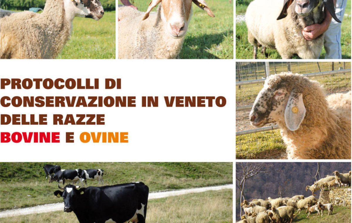 Protocolli di conservazione in Veneto delle razze ovine e bovine
