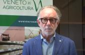 Previsioni vendemmiali 2020 – Alberto Negro