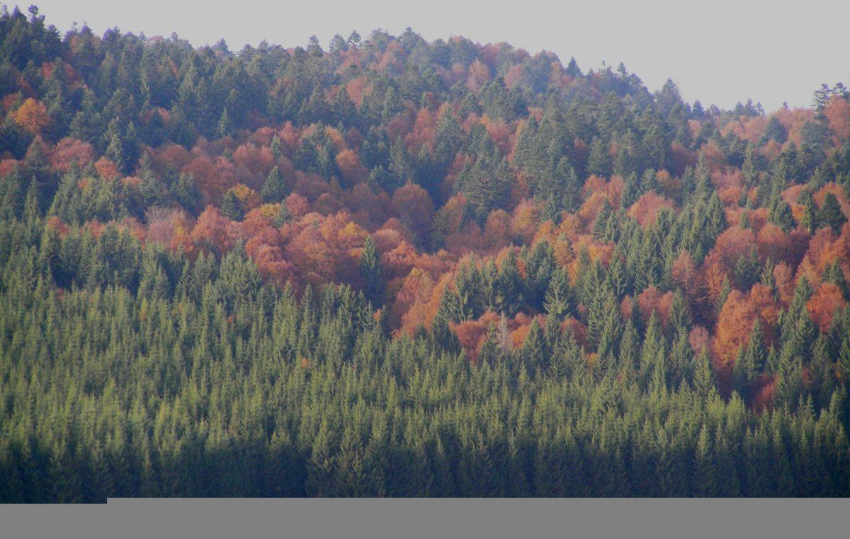 FESTIVAL DELLE FORESTE, VENETO AGRICOLTURA PROTAGONISTA