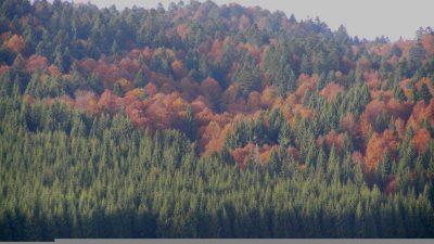 FESTIVAL DELLE FORESTE 2020: CONTO ALLA ROVESCIA