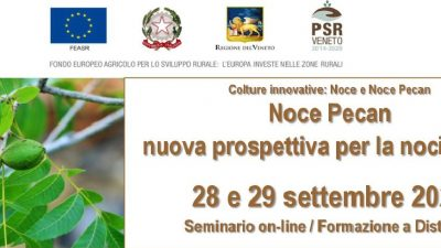 Colture innovative: noce e noce pecan