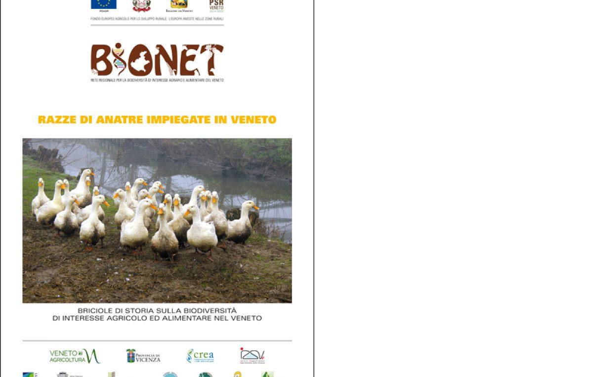 Razze di anatre impiegate in Veneto