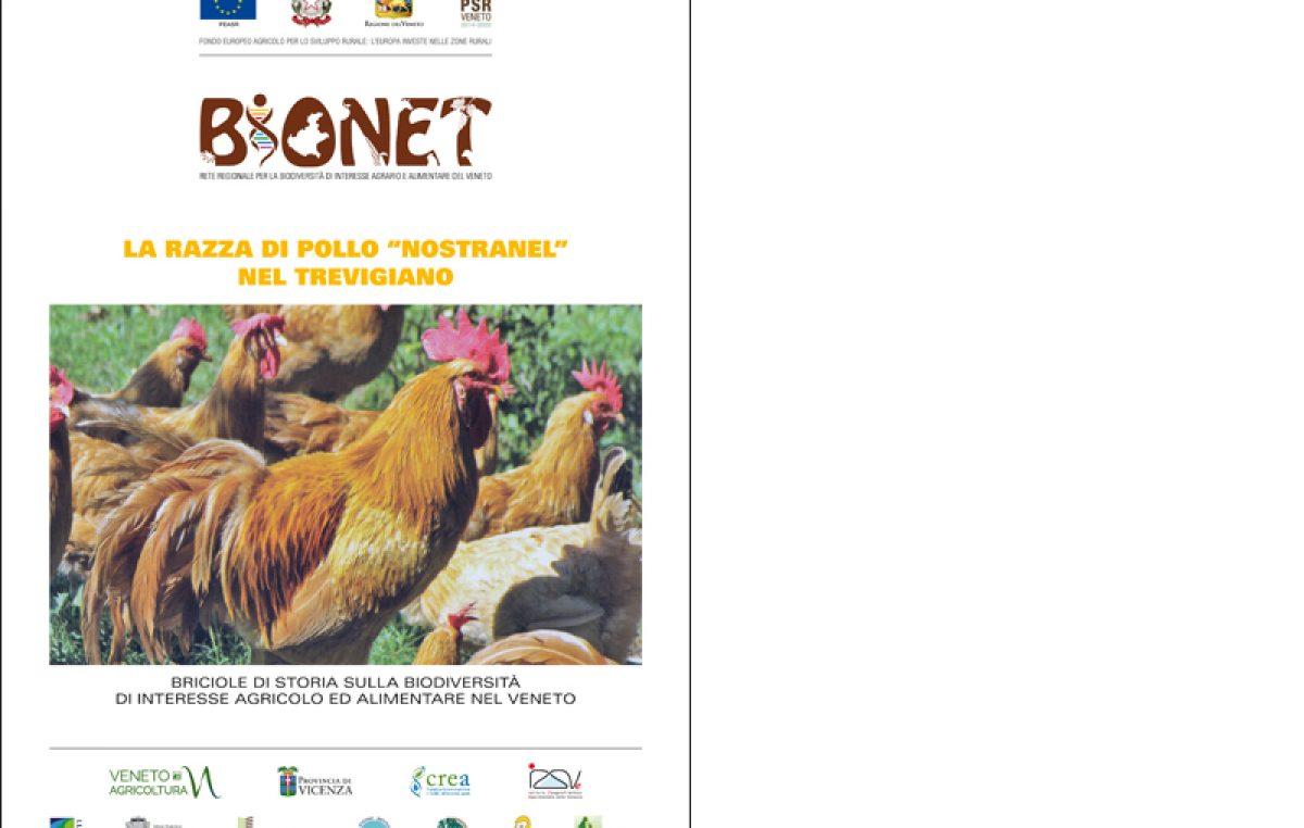 """La razza di pollo """"Nostranel"""" nel Trevigiano"""