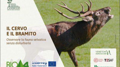 Il cervo e il bramito – Osservare la fauna selvatica senza disturbarla