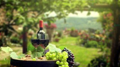 """Consuntivo vendemmia 2020 e focus su """"Il mercato del vino"""""""