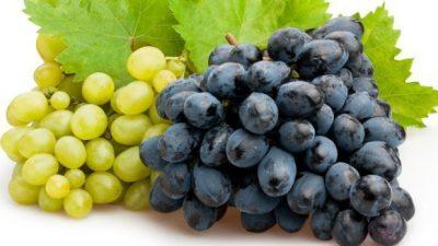 Nel 2020 restano stabili i prezzi delle uve venete