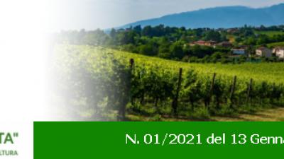 Newsletter Agricoltura Veneta n. 01 del 13.01.2021