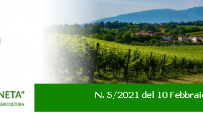 Newsletter Agricoltura Veneto n. 5/2021 del 10 febbraio 2021