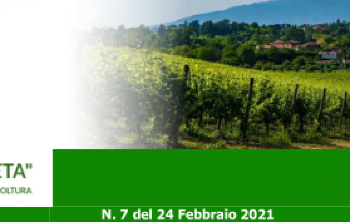 Newsletter Agricoltura Veneta n. 7 del 24 febbraio 2021