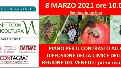 Piano per il contrasto alla diffusione della cimice della Regione del Veneto: primi risultati
