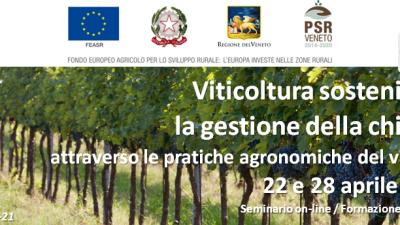 Viticoltura sostenibile: la gestione della chioma attraverso le pratiche agronomiche del vigneto