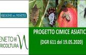 """Progetto regionale """"Cimice asiatica"""" – DGR 611 del 19.05.2020"""