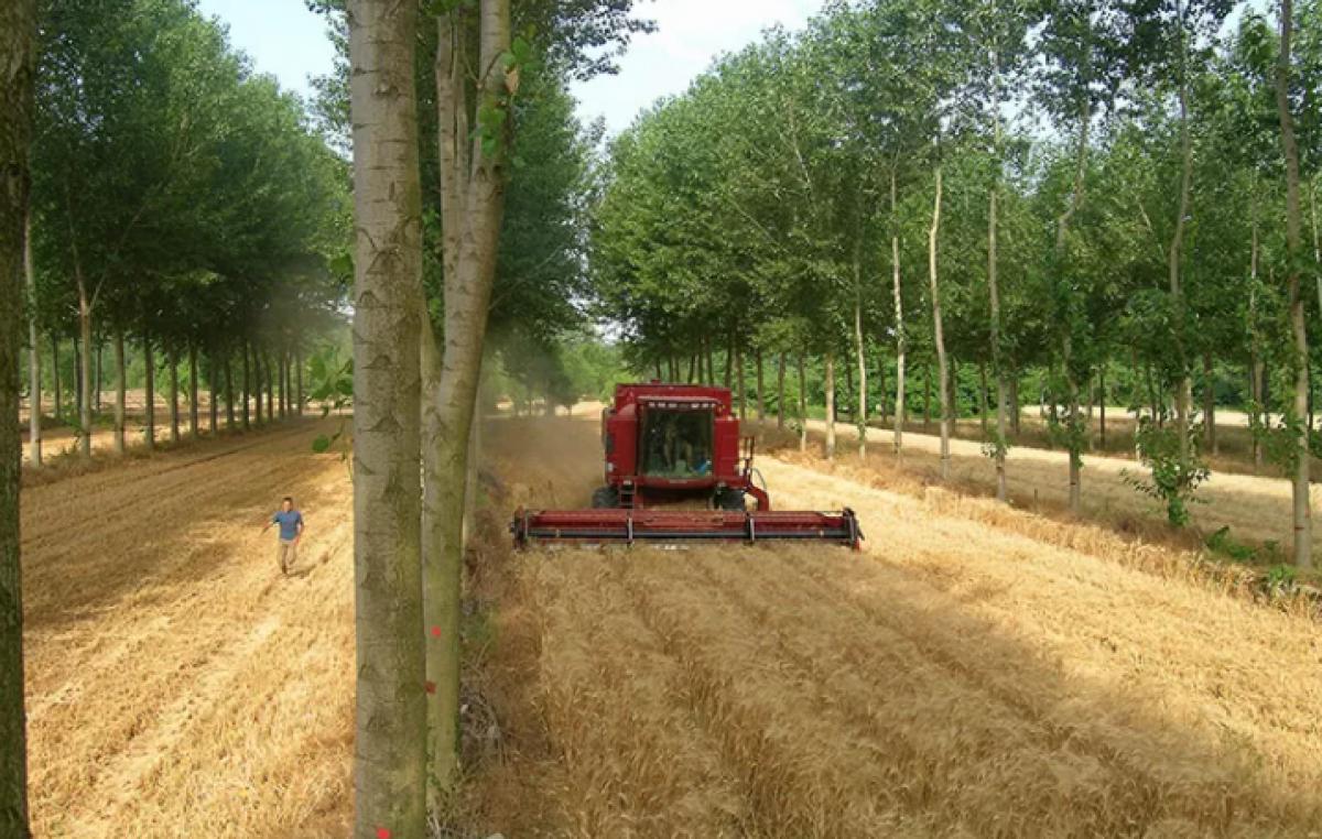 """SOSTENIBILITÀ E COESISTENZA TRA COLTURE AGRICOLE, ARBOREE E ZOOTECNIA? C'È """"EURAF E AGROFORESTRY 2021"""""""