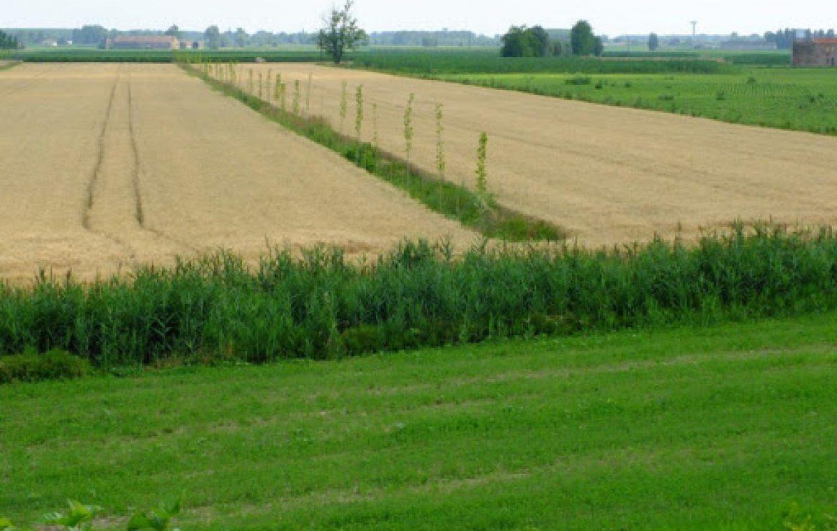 PFAS, ENTRANO IN AZIONE LE COLTURE AGROFORESTALI
