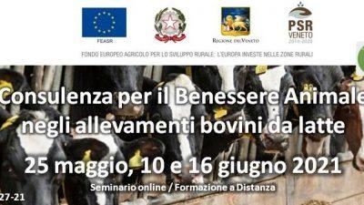 Consulenza per il benessere animale negli allevamenti bovini da latte