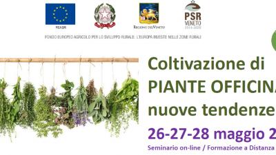 Coltivazione di piante officinali: nuove tendenze