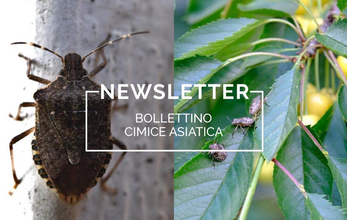 Bollettino Cimice asiatica n°10/2021 del 16.7.21