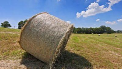 6,1 MIA/€ (+1,1%), TANTO VALE L'AGRICOLTURA VENETA NEL 2020, NONOSTANTE LA PANDEMIA