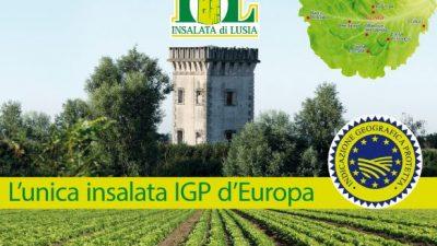 FOCUS SULL'INSALATA DI LUSIA (RO-PD), UNICA LATTUGA EUROPEA IGP