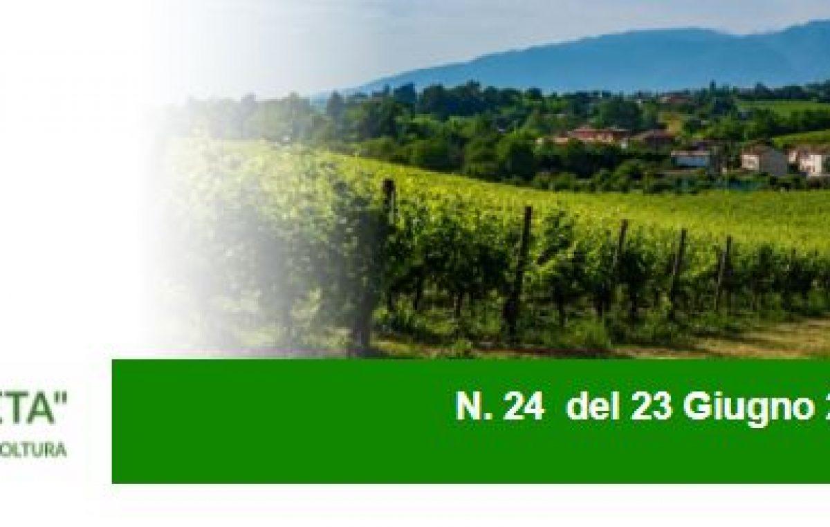Agricoltura Veneta n. 24 del 23.6.2021