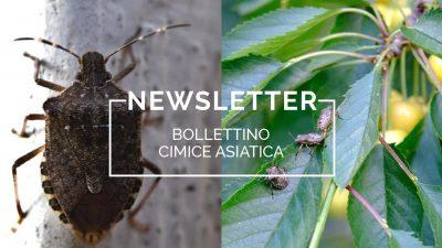 Bollettino Cimice asiatica n°11/2021 del 28.7.21