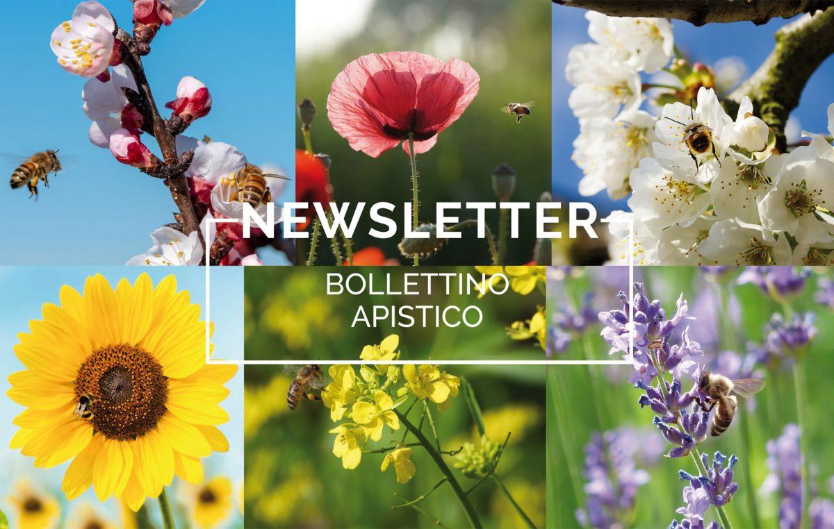 Bollettino Apistico n°8/2021 del 11.6.21