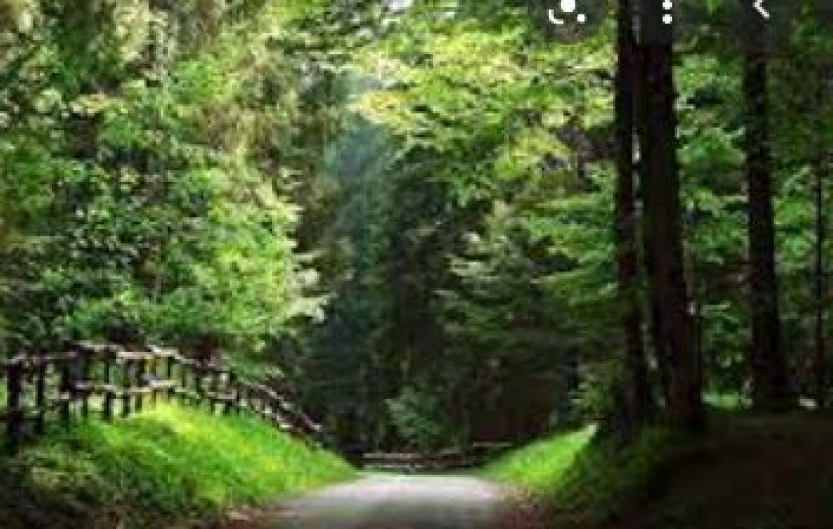 LUNEDI' 19 LUGLIO: D-DAY SULLE FORESTE DEL VENETO