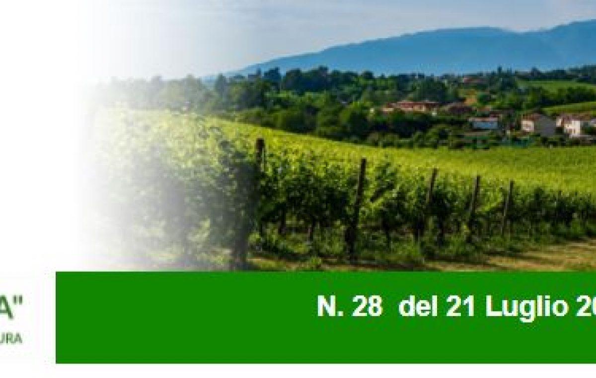 AGRICOLTURA VENETA N. 28 DEL 21.7.2021