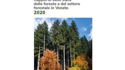 Rapporto sullo stato delle foreste e del settore forestale in Veneto 2020