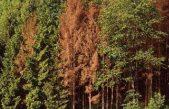 FORESTE VENETE, BOSTRICO: INIZIATIVE CONCRETE PER COMBATTERE LO XILOGAFO