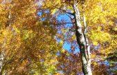 SETTEMBRE IN CANSIGLIO: FIERA E FESTIVAL DELLE FORESTE E MOLTO ALTRO