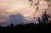 FORESTA DEL CANSIGLIO: UN SETTEMBRE DA SUPERSTAR